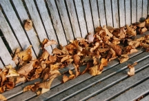 fall leaves on bench swing