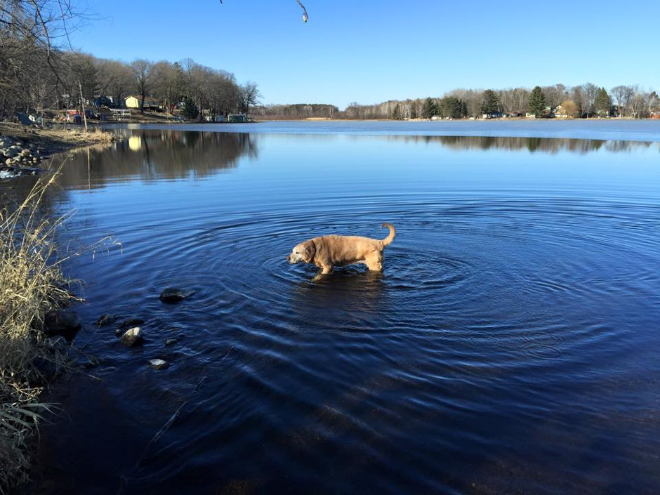 dog in lake spring