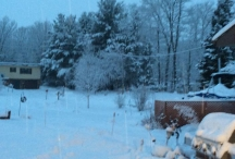 winter snowy yard 2